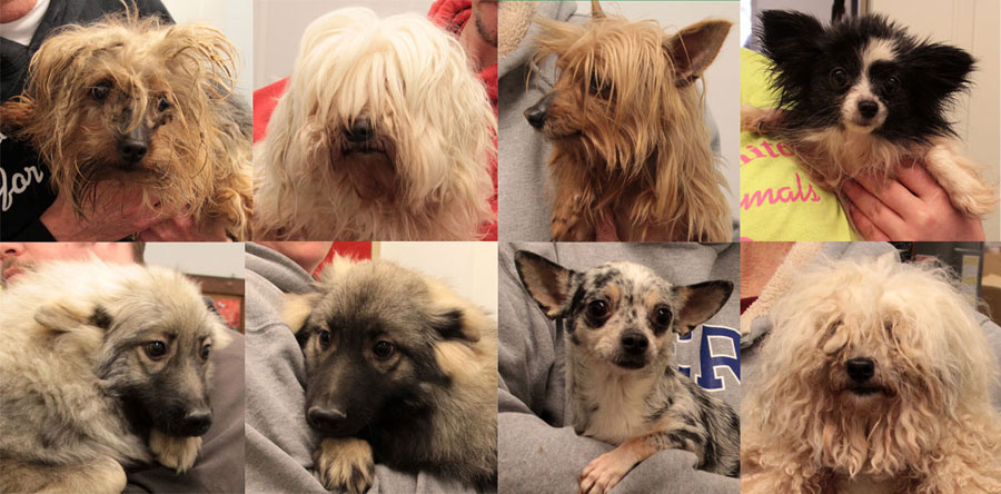 8 Dogs Rescued From Nebraska Puppy Mill Hua Blog Hearts United