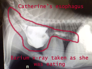 CatherineXRay3